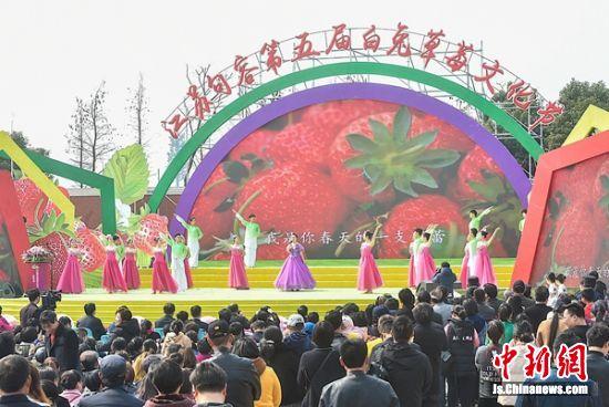 句容第五届白兔草莓文化节开幕迎来八方客什么是金枪鱼图片图片