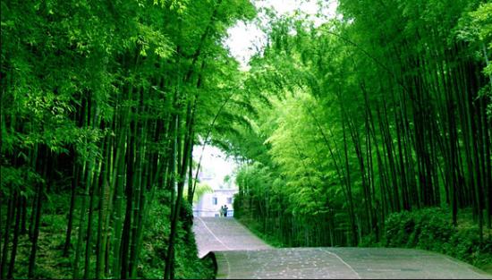南海竹林    图片